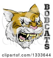 Clipart Of A Roaring Aggressive Bobcat Mascot Head And Text Royalty Free Vector Illustration by AtStockIllustration