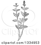 Black And White Woodcut Herbal Mint Plant
