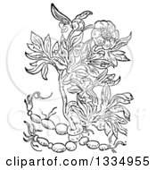 Clipart Of A Black And White Woodcut Herbal Peony Plant Royalty Free Vector Illustration