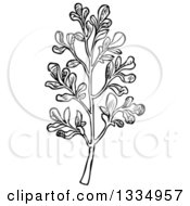 Clipart Of A Black And White Woodcut Herbal Rue Plant Royalty Free Vector Illustration