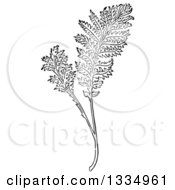 Clipart Of A Black And White Woodcut Herbal Tansy Plant Royalty Free Vector Illustration