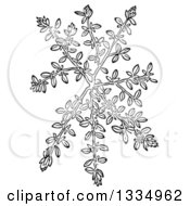 Clipart Of A Black And White Woodcut Herbal Thyme Plant Royalty Free Vector Illustration