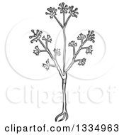 Clipart Of A Black And White Woodcut Herbal Anise Plant Royalty Free Vector Illustration