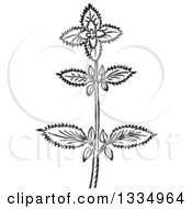 Clipart Of A Black And White Woodcut Herbal Basil Plant Royalty Free Vector Illustration