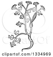 Clipart Of A Black And White Woodcut Herbal Coriander Cilantro Plant Royalty Free Vector Illustration