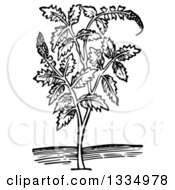 Clipart Of A Black And White Woodcut Herbal Medicinal Agrimony Plant Royalty Free Vector Illustration
