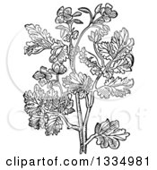 Clipart Of A Black And White Woodcut Herbal Medicinal Celandine Plant Royalty Free Vector Illustration