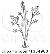 Clipart Of A Black And White Woodcut Herbal Medicinal Chaste Tree Plant Royalty Free Vector Illustration