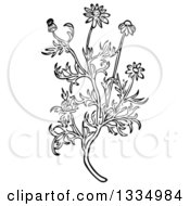 Clipart Of A Black And White Woodcut Herbal Medicinal Chamomile Plant Royalty Free Vector Illustration