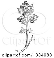 Clipart Of A Black And White Woodcut Herbal Medicinal Feverfew Plant Royalty Free Vector Illustration by Picsburg