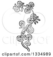Clipart Of A Black And White Woodcut Herbal Medicinal Ground Ivy Plant Royalty Free Vector Illustration