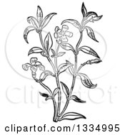 Clipart Of A Black And White Woodcut Herbal Medicinal Periwinkle Plant Royalty Free Vector Illustration