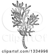 Clipart Of A Black And White Woodcut Herbal Medicinal Southernwood Plant Royalty Free Vector Illustration by Picsburg