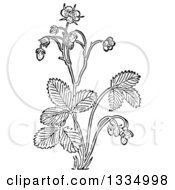 Black And White Woodcut Herbal Medicinal Wild Strawberry Plant