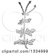 Clipart Of A Black And White Woodcut Herbal Medicinal Vervain Verbena Plant Royalty Free Vector Illustration