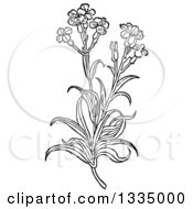 Clipart Of A Black And White Woodcut Herbal Medicinal Wallflower Plant Royalty Free Vector Illustration