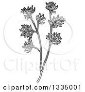 Clipart Of A Black And White Woodcut Herbal Medicinal Wormwood Plant Royalty Free Vector Illustration