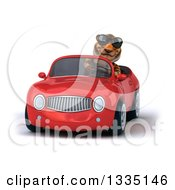 Clipart Of A 3d Tiger Wearing Sunglasses And Driving A Red Convertible Car Royalty Free Vector Illustration