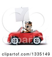 Clipart Of A 3d Tiger Wearing Sunglasses Roaring Holding A Blank Sign And Driving A Red Convertible Car Royalty Free Vector Illustration