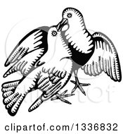 Clipart Of A Sketched Black And White Doodle Of A Dove Pair Royalty Free Vector Illustration by Prawny