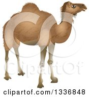 Light Brown Camel