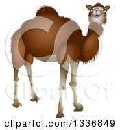 Curious Dark Brown Camel