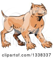 Clipart Of A Sketched Brown Pitbull Dog Royalty Free Vector Illustration