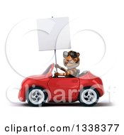 Clipart Of A 3d Tiger Wearing Sunglasses Holding A Blank Sign And Driving A Red Convertible Car 2 Royalty Free Illustration