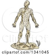 Clipart Of A Retro Sketched Or Engraved Anatomical Man Of Muscle Royalty Free Vector Illustration