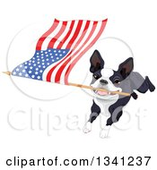 Clipart Of A Cute Boston Terrier Or French Bulldog Running With An American Flag Royalty Free Vector Illustration