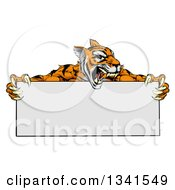 Clipart Of A Cartoon Roaring Aggressive Tiger Sports Mascot Holding A Blank Wide Sign Royalty Free Vector Illustration