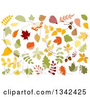 Clipart Of Colorful Autumn Leaves 2 Royalty Free Vector Illustration