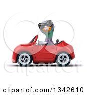 Clipart Of A 3d Pigeon Wearing Sunglasses And Driving A Red Convertible Car To The Left Royalty Free Illustration