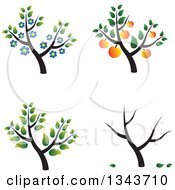 Clipart Of Trees With Blossoms Apricots And Leaves Royalty Free Vector Illustration