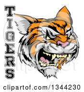 Clipart Of A Vicious Growling Tiger Mascot Face And Text Royalty Free Vector Illustration