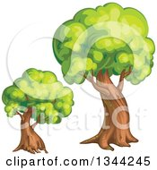 Clipart Of Mature Trees Royalty Free Vector Illustration