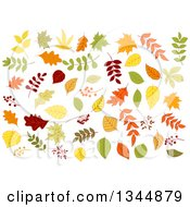Clipart Of Colorful Autumn Leaves 5 Royalty Free Vector Illustration