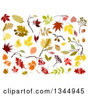 Clipart Of Colorful Autumn Leaves 4 Royalty Free Vector Illustration