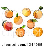 Clipart Of Cartoon Apricots Royalty Free Vector Illustration