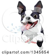 Clipart Of A Cute Boston Terrier Dog Drooling And Running Royalty Free Vector Illustration by Pushkin