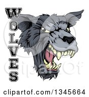 Clipart Of A Roaring Gray Wolf Mascot Head And Text Royalty Free Vector Illustration
