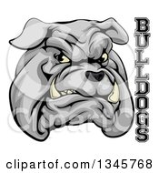 Clipart Of A Growling Gray Aggressive Bulldog Mascot Face With Text Royalty Free Vector Illustration by AtStockIllustration