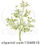 Clipart Of A Moringa Plant Branch Royalty Free Vector Illustration