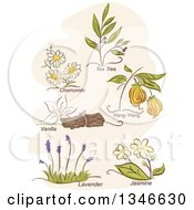Clipart Of Sketched Herbal Plants And Titles Royalty Free Vector Illustration