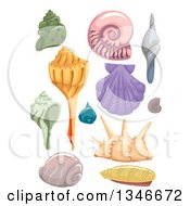 Clipart Of Scallop Nautilus And Conch Sea Shells Royalty Free Vector Illustration by BNP Design Studio