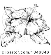 Clipart Of A Black And White Engraved Hibiscus Flower And Leaves Royalty Free Vector Illustration