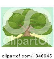 Clipart Of A Beautiful Mature Oak Tree On Top Of A Hill Over A Sunset Sky Royalty Free Vector Illustration