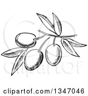 Clipart Of A Black And White Sketched Branch Of Olives And Leaves Royalty Free Vector Illustration