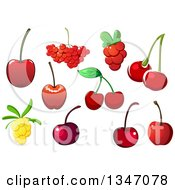 Clipart Of Cherries Cranberries And Yellow Berries Royalty Free Vector Illustration by Vector Tradition SM