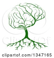 Clipart Of A Green Brain Canopied Tree With Roots Royalty Free Vector Illustration